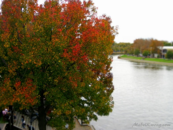 Within seasons, there's always room for change. Trees are never shy to show their colours | Weekly Photo Challenge: Room.