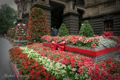 Christmas Flowers, Melbourne Town Hall, Melbourne